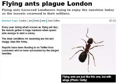 Flying_ants